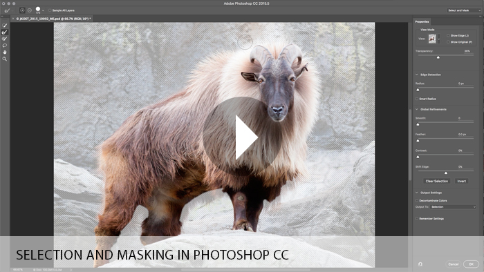 Selection and Masking in Photoshop CC